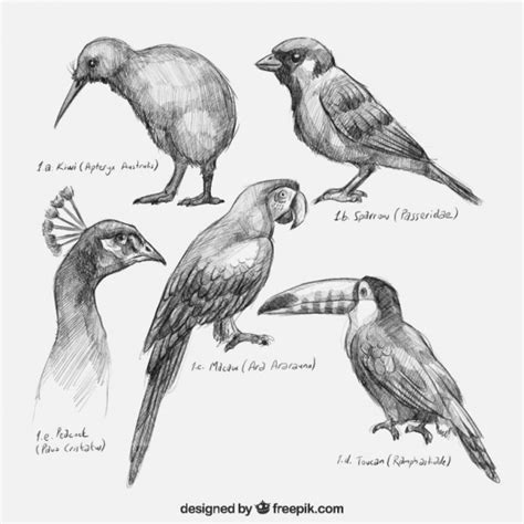 Hand drawn birds collection Vector | Premium Download