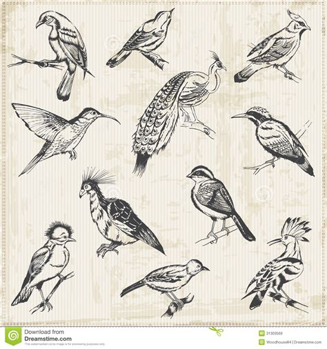 Hand Drawn Birds Royalty Free Stock Images   Image: 31303569
