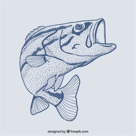 Hand drawn fish Vector | Free Download