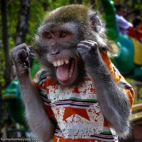 Happy Monkey - Funny Monkey Pictures