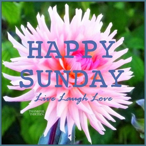 Happy Sunday Live Laugh Love Pictures, Photos, and Images ...