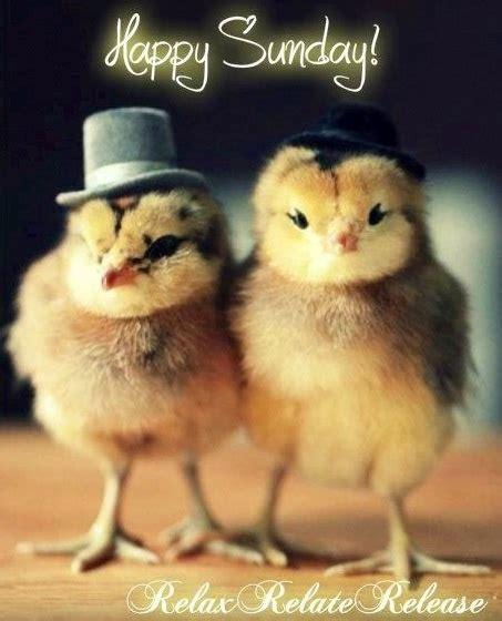 Happy Sunday Quotes Cute. QuotesGram