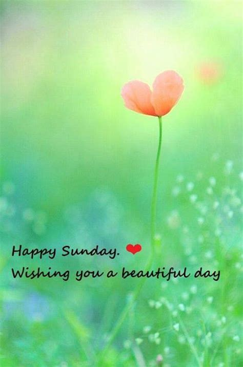 Happy Sunday Wishing You A Beautiful Day Pictures, Photos ...