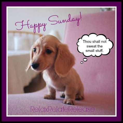 Happy Sunday with cute puppy thinking positive | Good ...
