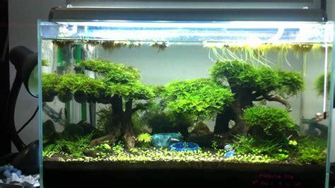 harmonicbreeze's redbee shrimp tank - YouTube
