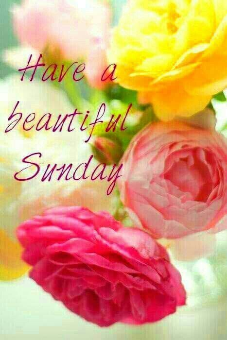 Have A Beautiful Sunday Flowers Quote Pictures, Photos ...