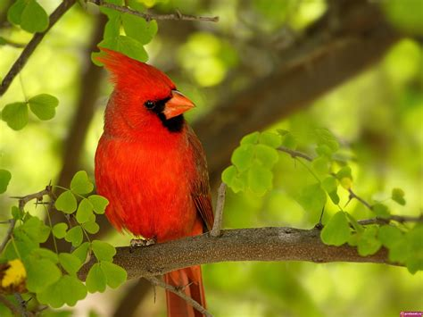 HD Wallpapers: Beautiful Birds Wallpapers HD