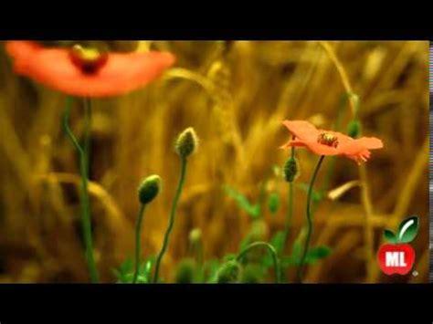 Healthy ML Naturaleza full HD 1080p - YouTube