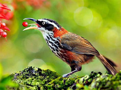 Hermosas aves!!!!!!!!!!   Imágenes   Taringa!