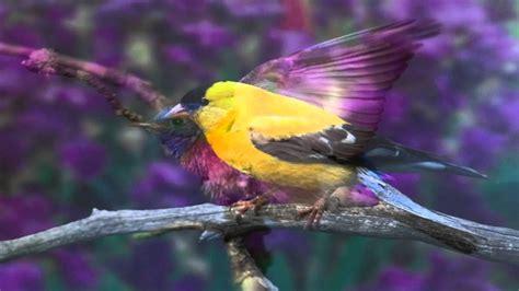 Hermosas fotos de pájaros con música relajante de fondo ...