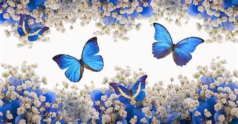 Hermosas Mariposas Azules Full HD en Fondos 1080
