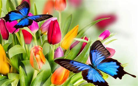 Hermosas Mariposas Azules y Flores de Colores | Fotos e ...