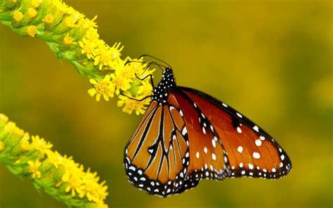 Hermosas Mariposas en la Naturaleza | Fotos e Imágenes en ...