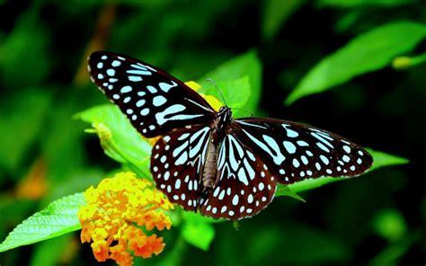 Hermosas Mariposas - Taringa!