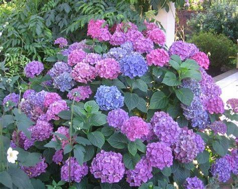 Hermosas Plantas Ornamentales Con Nombre | Imagenes De ...