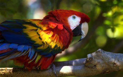 Hermoso Papagayo de Brillantes Colores   Fotos e Imágenes ...
