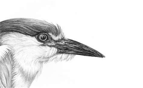 heron-bird-pencil-drawing - Fine Art Blogger