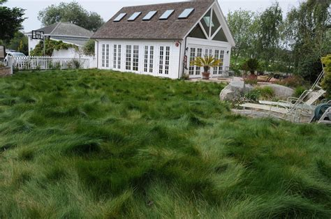 Hey, California, you can still have a lawn! Here are five ...