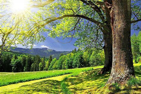 High quality summer landscape wallpaper 3d murah for pc