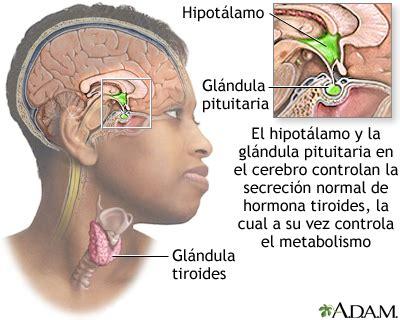 Hipertiroidismo: MedlinePlus enciclopedia médica