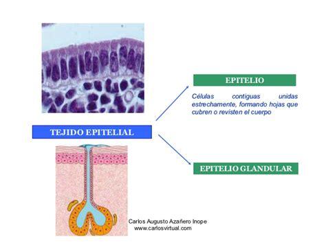 Histologia - TEJIDO EPITELIAL