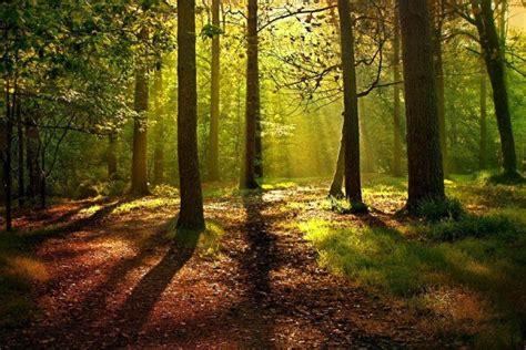 Historia de los bosques en España