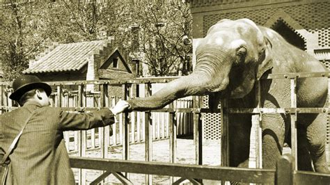 Historia   Zoo Barcelona