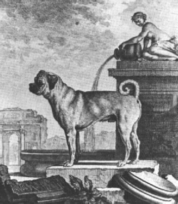 History's Famous Dogs | Ark Animal Centre