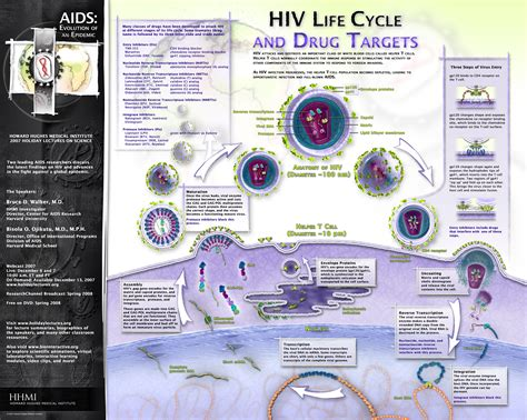 HIV Life Cycle and Drug Targets Poster/Graphic   AIDS ...