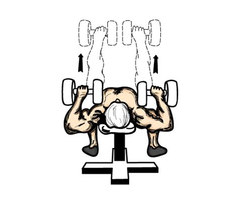 Home Dumbbell Workout Routine by building muscle 101