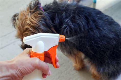 Homemade Natural Coat Freshener for Dogs   Dog Care - The ...