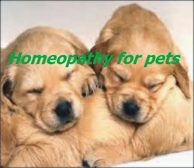 Homeopathic clinics for Pet Care |Homoeoscan | Homoeopathy
