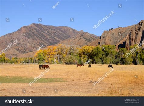 Horses Grazing In Prairies In Wyoming Foto Stock 213456493 ...