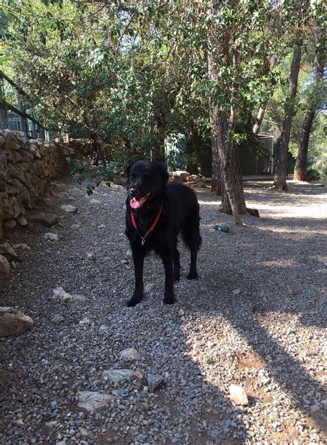 Hotel Canino en Barcelona | Residencia Fontfreda Barcelona