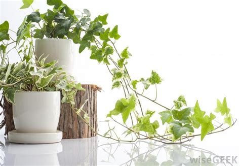 How Do I Choose the Best Indoor Plant Pots?  with pictures