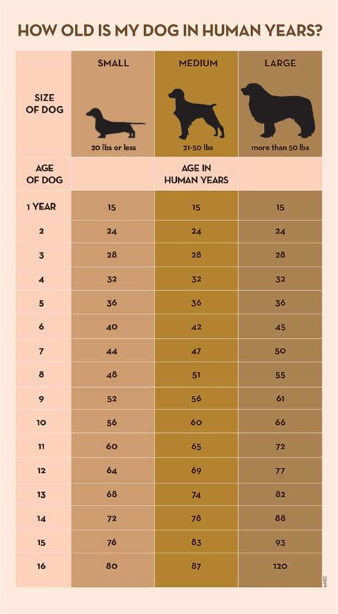 How to Calculate Dog Years to Human Years - Healthy Hounds ...