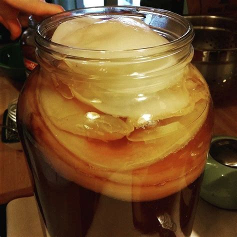 How to Create a Kombucha SCOBY Hotel (to Store Extra ...