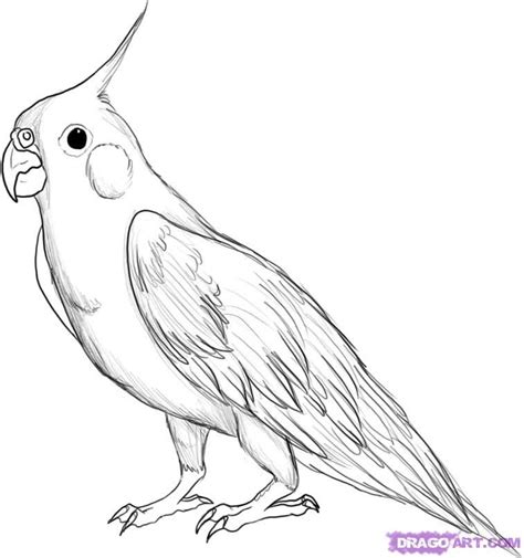 How to Draw a Bird Step by Step Easy with Pictures | Birds ...