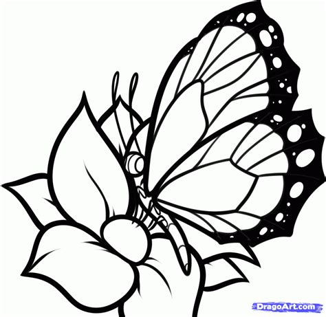 How to Draw a Butterfly on a Flower, Butterfly and Flower ...