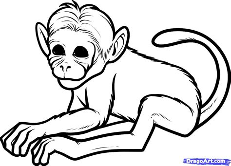 How to Draw a Chimeric Monkey, Chimeric Monkeys, Step by ...