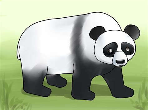 How to Draw a Panda (with Pictures) - wikiHow