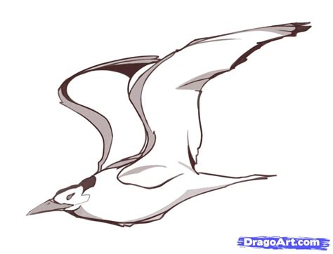 How to Draw Flying Birds, Step by Step, Birds, Animals ...