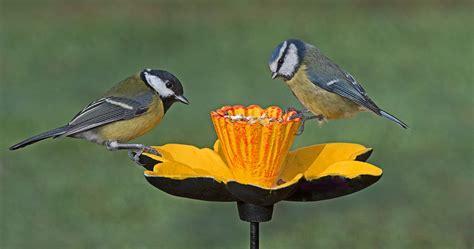How to feed wild birds | Gardman Daffodil | UK