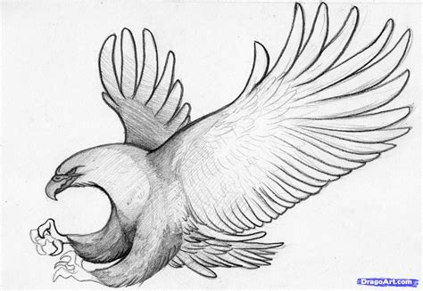 How to Sketch an Eagle In Pencil, Draw an Eagle Bird, Step ...