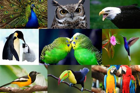Hoy es el Día Internacional de las Aves   Primicias24.com