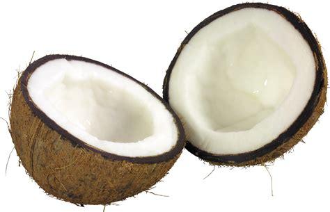 HQ Coconut PNG Transparent Coconut.PNG Images.   PlusPNG