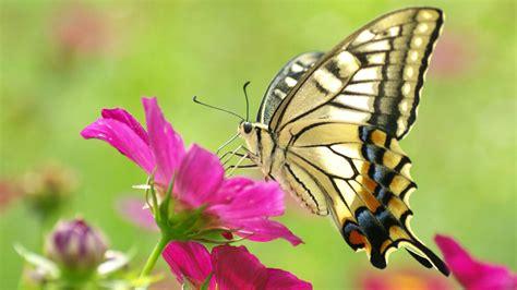 http://www.hotcurrentaffairs.com/butterfly flower ...