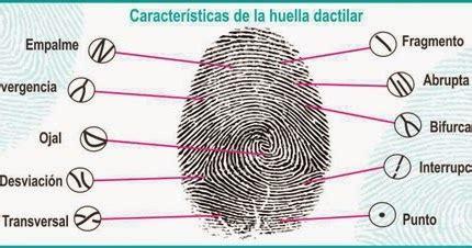 HUELLAS FORENSES: PUNTOS CARACTERÍSTICOS DE LAS HUELLAS ...