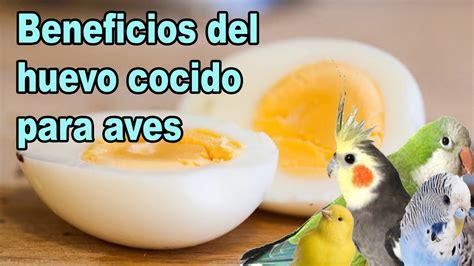 Huevo cocido para pájaros, canarios y exóticos   YouTube