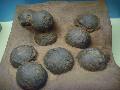 Huevo de dinosaurio - Wikipedia, la enciclopedia libre